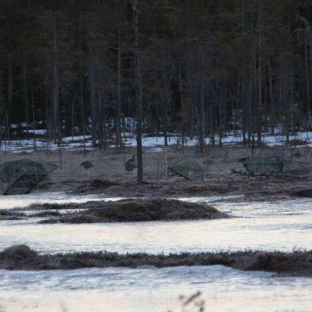 morgendlicher Fang in Schweden ©Wildland-Stiftung Bayern