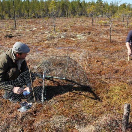 Aufbau der Fangkörbe in Schweden ©Wildland-Stiftung Bayern