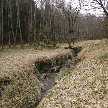 Altenreiter Graben © Wildland-Stiftung Bayern