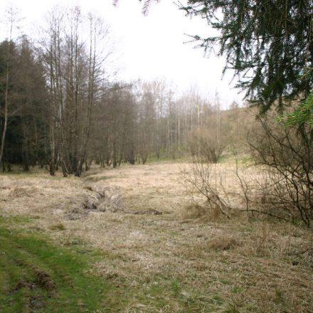 Waldlichtung am Altenreiter Graben © Wildland-Stiftung Bayern