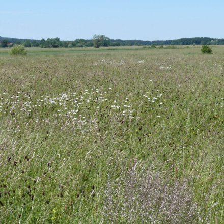 Artenreiche Wiesen© Wildland-Stiftung Bayern