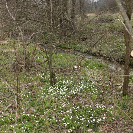 Frühblüher © Wildland-Stiftung Bayern