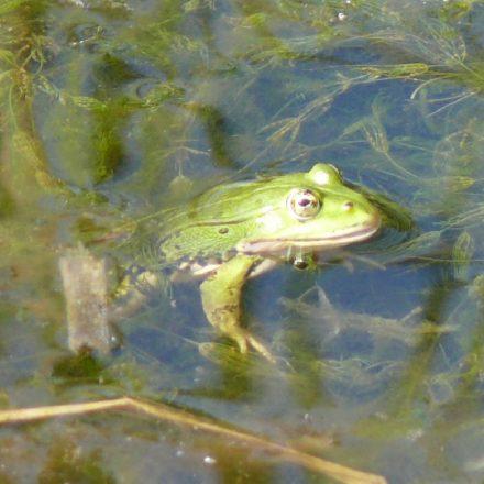Amphibien© Wildland-Stiftung Bayern