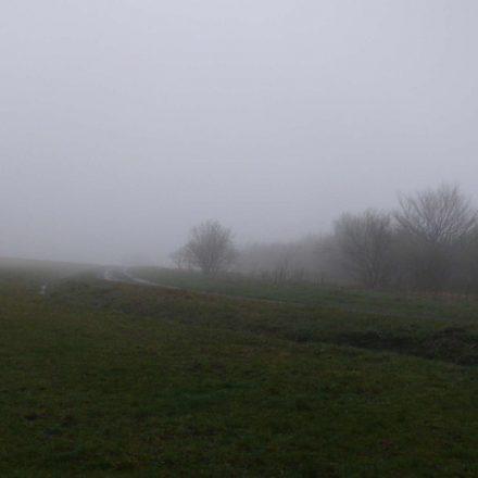 Nebel am Zählmorgen © Wildland-Stiftung Bayern