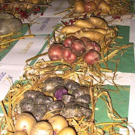 alte Kartoffelsorten©Wildland-Stiftung Bayern