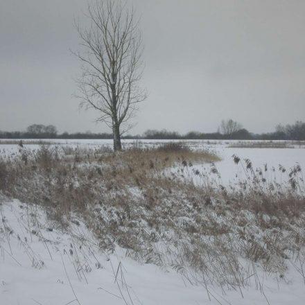 wichtige Strukturen im Winter © Wildland-Stiftung Bayern