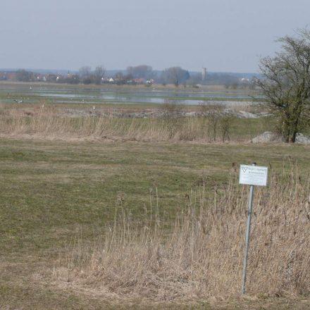 Wiesmet im Frühjahr © Wildland-Stiftung Bayern