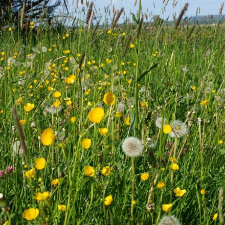 Artenreiche Wiesen © Wildland-Stiftung Bayern