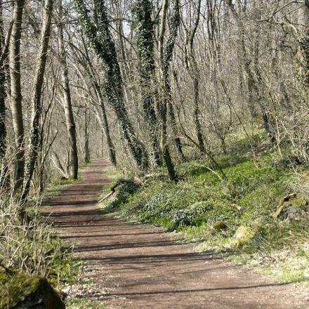 Waldweg Frühling ©I. Göde