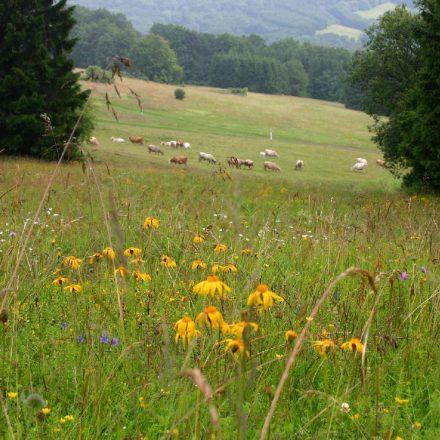 Artenreiche Wiesen am Feuerberg©Wildland-Stiftung Bayern
