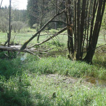 Gartenried Waldwiese