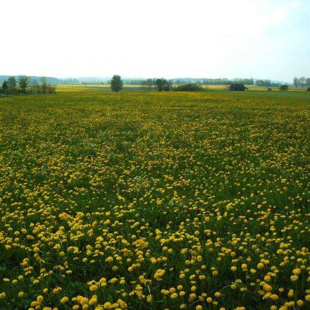 Intesiv bewirtschaftete Fettwiese © Wildland-Stiftung Bayern