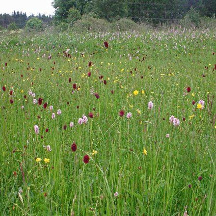 Artenvielfalt in der Wiese © Wildland-Stiftung Bayern
