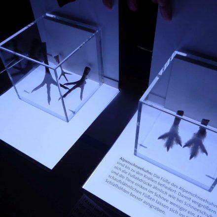 Detail zur Ausstellung-Hühnervögel ©Wildland-Stiftung Bayern