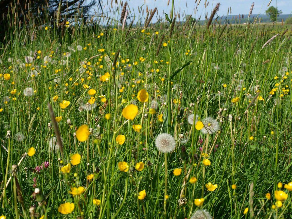 Artenreiche Extensivwiesen ©Wildland-Stiftung Bayern