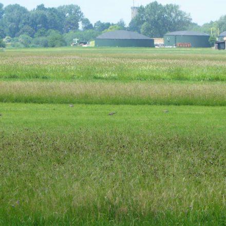 Brachvögel vor Biogasanlage©Wildland-Stiftung Bayern