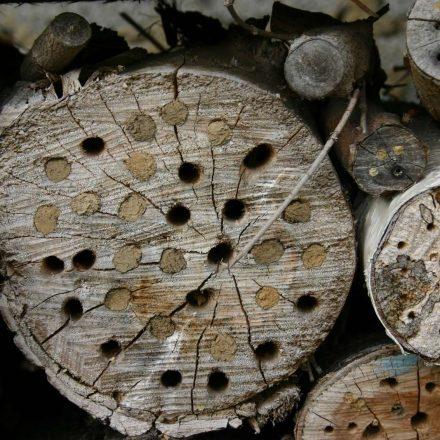 Wildbienen nutzen Nisthilfen©I-Göde_piclease