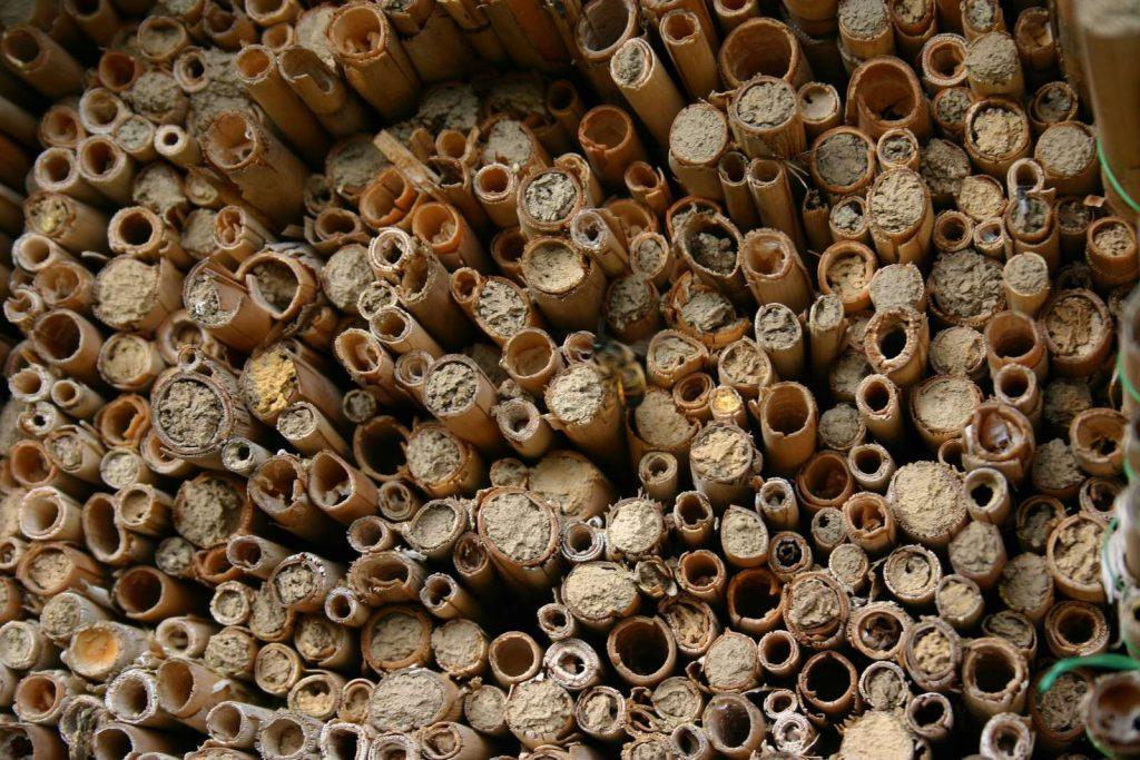 Einige Wildbienen überwintern in geschlossenen Schilfröhrchen©I-Göde_piclease