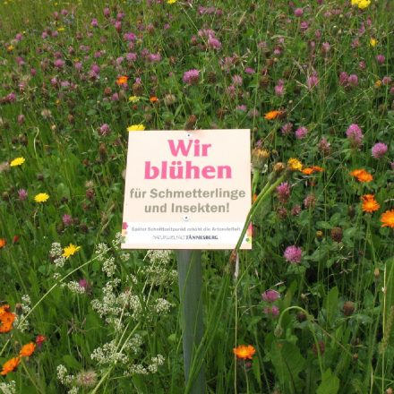 ökologisch ausgerichtetes Grünflächenmanagement©Gabriele Schmidt