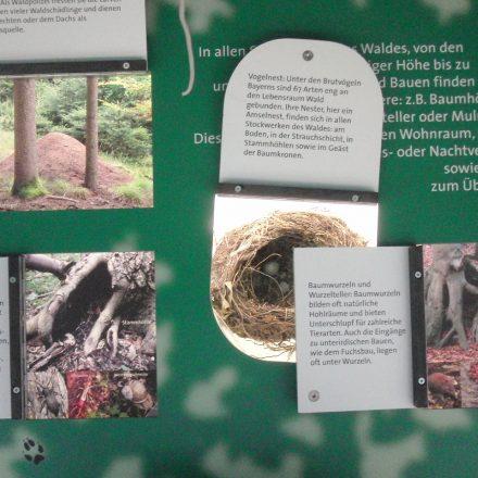 """Ausstellung """"Spurensuche im Wald""""©Wildland-Stiftung Bayern"""