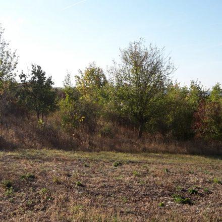 Biotopfläche der Wildland-Stiftung©O. Herkert