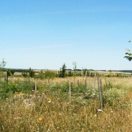Beginn der Anlage einer Biotopfläche für den Ortolan©Wildland-Stiftung Bayern