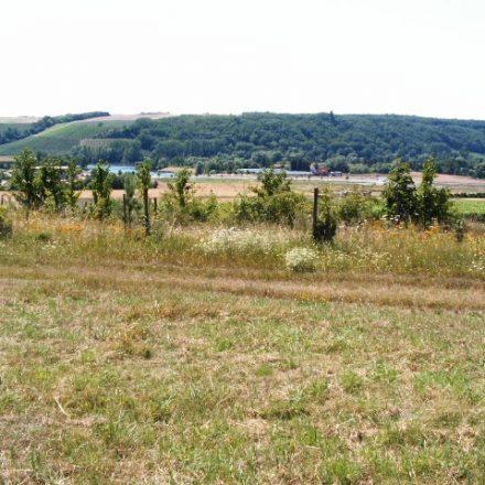 Beginn der Anlage einer Biotopfläche für den Ortolan und Tiere der Feldflur©Wildland-Stiftung Bayern