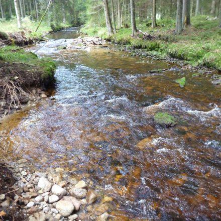 Nach der Renaturierung©C. Schmidt / Nationalparkverwaltung Bayerischer Wald
