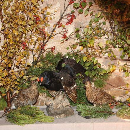 Birkhahn und Hennen, die Leitart in der Rhön©T. Kirchner