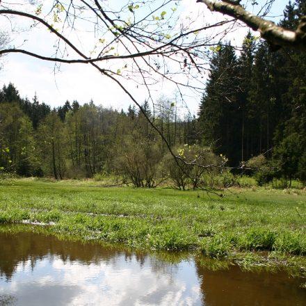 Feuchtwiese im Schönseer Land©Wildland-Stiftung Bayern