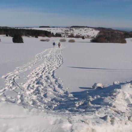Gerade im Winter gilt es Störungen zu vermeiden©T. Kirchner