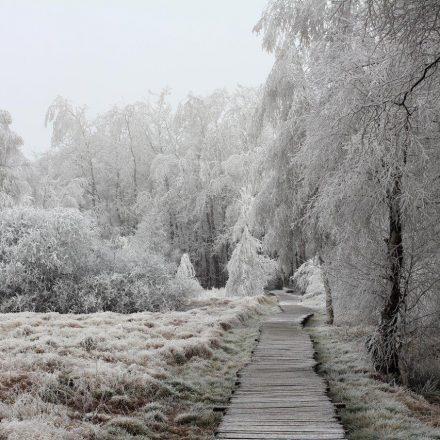 Moorsteg im Winter©T. Kirchner