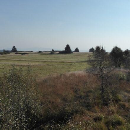 Morgenansitz im Naturschutzgebiet Lange Rhön©Wildland-Stiftung Bayern