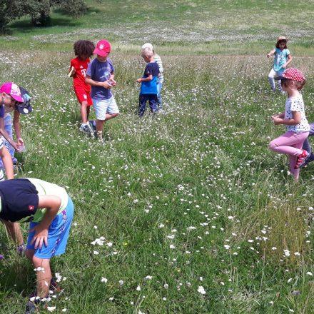 Die Schüler gehen auf Insektenjagd©Treffpunkt Wildland