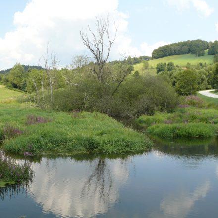 Biotop-Gestaltung durch den Biber – überstaute Wildland-Wiese bei Rumpenstadl©A. Hofmann/Naturpark Bayerischer Wald