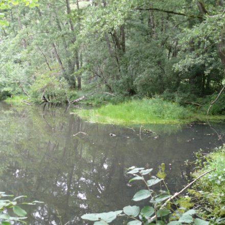 Bereits im Jahr 2003 aus der Nutzung genommener Teich©Wildland-Stiftung Bayern