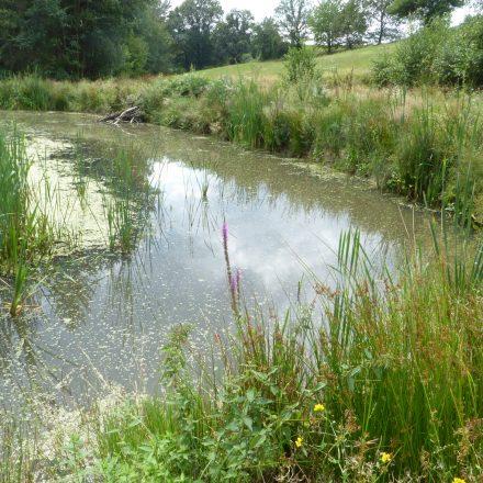 neues Laichgewässer für Amphibien und Libellen©Wildland-Stiftung Bayern