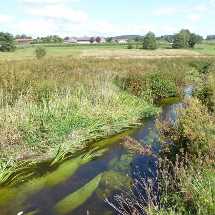 neue Biotopfläche - Ufergrundstück an der Ascha©Wildland-Stiftung Bayern