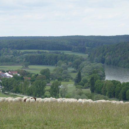 Donautal mit flussbegleitender Aue©VöF Kelheim
