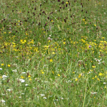 artenreiche Wiesen in der Aue©VöF Kelheim
